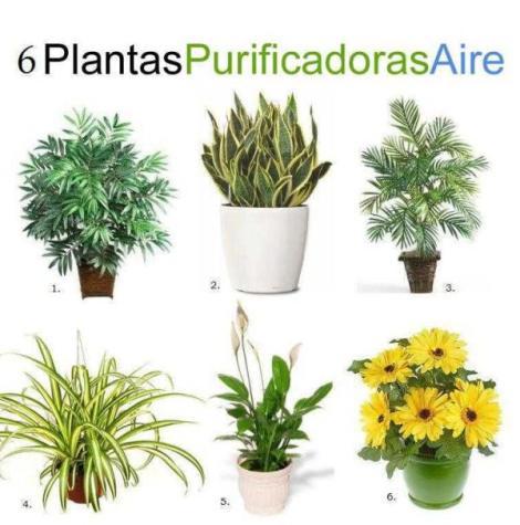 6 plantas que purifican el aire casa huertos dominicana - Plantas de interior que purifican el aire ...